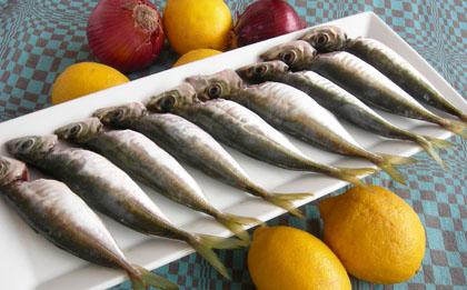 Balık Tutmanın Püf Noktaları Nelerdir ?